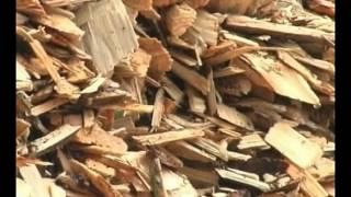 Puls Ziemi - Biomasa