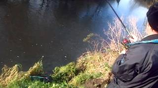 River Roach Heywood Big Chub Catch