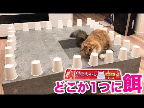 猫は大量の紙コップの中からエサを見つけられるのか?!