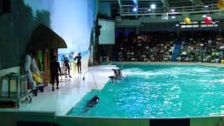 Dubai Dolphin Show in Creek Park with DUA & TAHA part 2