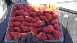 Live from the Fields, Strawberry Quality, Salinas, California