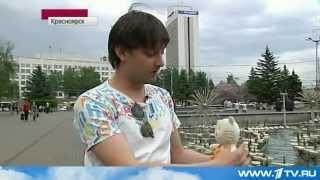 Выборы в Красноярске с Плюшевым Котом