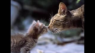 Кошка и хвост (сказка-притча)
