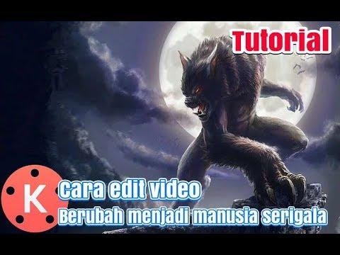 Cara Edit Video Berubah Menjadi Manusia Serigala Di Android Mudah Kinemaster Tutorial Youtube