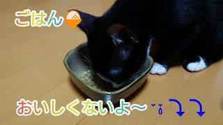 子猫のご飯を変えたら食べなくなりました。鳴きながら以前のフードを要求していたり寂しかったのかゴロゴロ甘えたりしています。 thumbnail