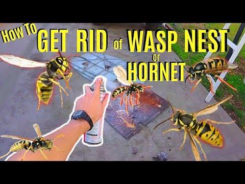 HUGE WASP NEST & How To Get Rid Of -Jonny DIY