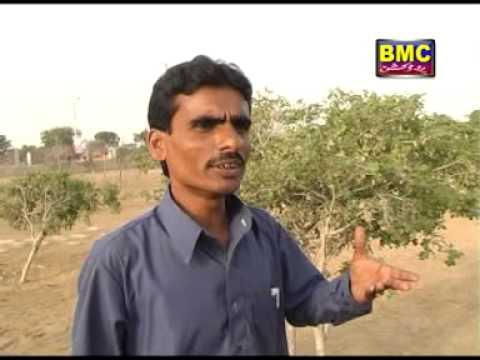Anwar Rahim | Na K To Muskati | Vol 6 | Balochi Hits Songs | BalochiWorld