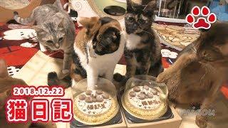 2018 12 21 猫日記 猫用クリスマスケーキ Cat's diary  December 21, 2018 Christmas cake for cats