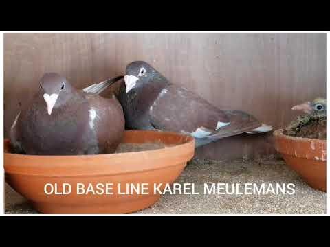 OLD BASE LINE
