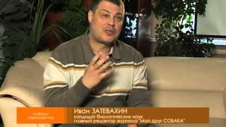 """Передача И Затевахина """"Диалоги о животных"""" о Бульдоге"""