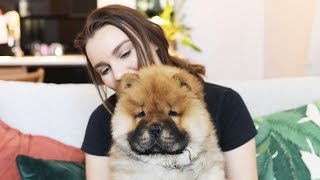 One Million Subscribers & My Chow Chow ...