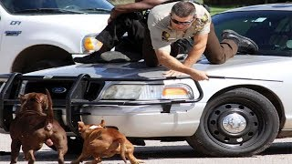 Dogs Chasing People. Funny moments 2020.