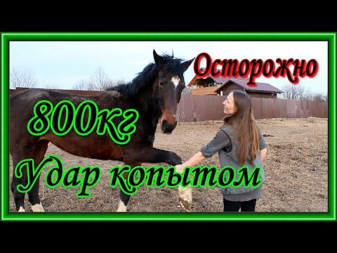 Если хотите покормить лошадь, но не знаете как правильно и чем, смотрите это видео.