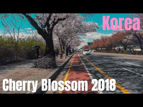 1 - Yeouido Cherry Blossom Festival 2018 (여의도 벚꽃축제) in Seoul Korea
