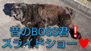 YouTubeを始めた頃のBOSS君から今のボス君までざっくりスライドショー♥ ...