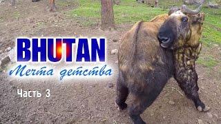 Столица Бутана город Тхимпху, такины в зоопарке и 109 ступ - БУТАН - Мечта Детства #3(