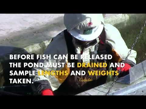 Texas Fish Hatchery (A.E. Woods) Quick Tour