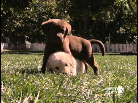 Animal Atlas: Puppy Party - Trailer