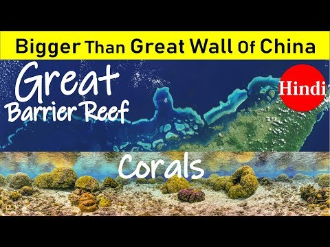 Corals: Great Barrier Reef Sea Forest  UNESCO heritage  7 Natural Wonder Of The World