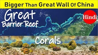 Corals: Great Barrier Reef Sea Forest | UNESCO heritage | 7 Natural Wonder Of The World
