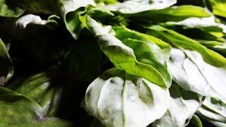 Homemade Oregano & Basil Leaf Powders / Flakes