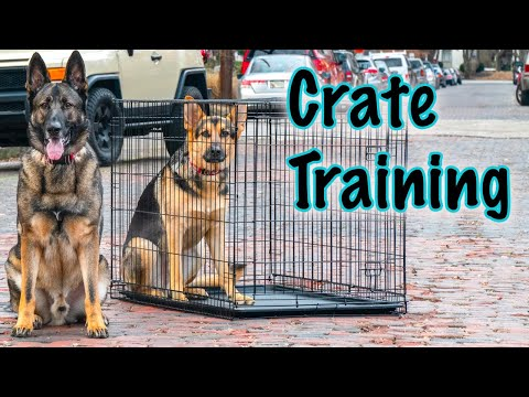 Day in the Life with German Shepherds!