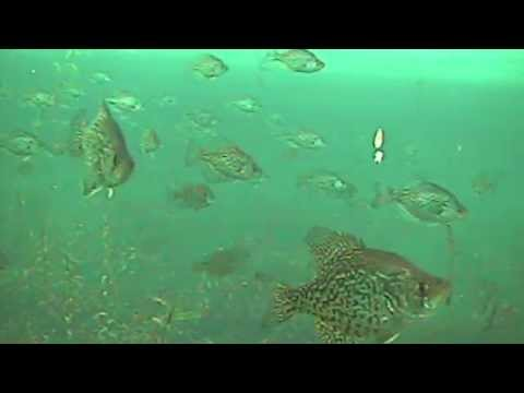 Awesome Underwater Fish Video Captured By Aqua-Vu Systems.