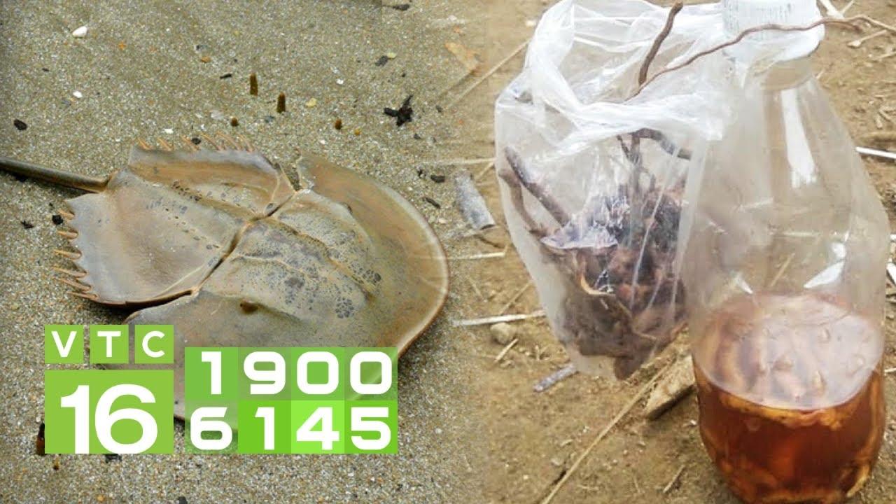 Cảnh báo: Tử vong do ăn so biển, uống rượu rễ cây rừng | VTC16