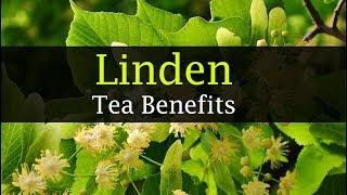 Linden Tea Benefits - Anxiety, Honey, Side effects