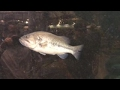 Fish tank pranks go viral in troubling trend
