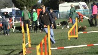 Ruby Border Terrier 2nd Grade 4 Jumping