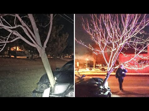 Lori - Woman Charged With DUI After Carrying Tree Along For A Ride