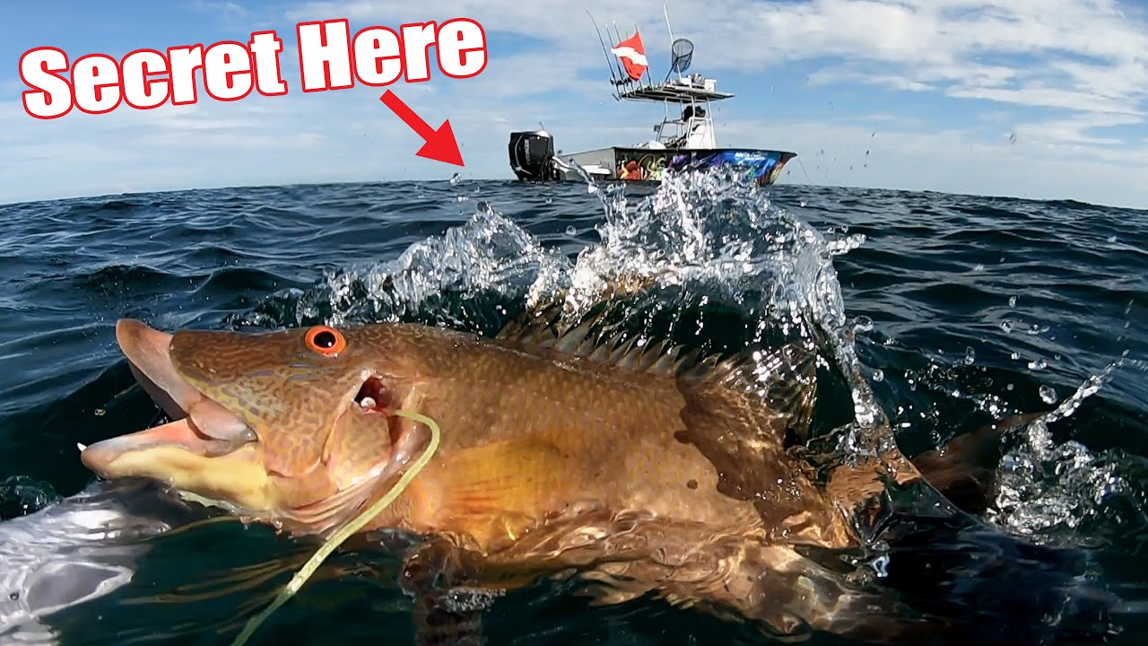 the SECRET JUICE to catch Hogfish {catch and cook}