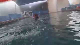French Mastiff / Dogue De Bordeaux Oliver Swims Over & Underwater In The Pool For Toys.