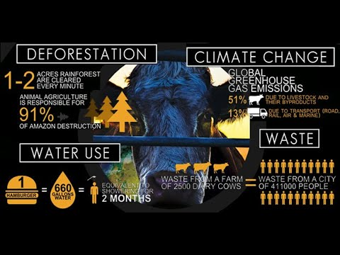 Cowspiracy The Sustainability Secret Educational Edit