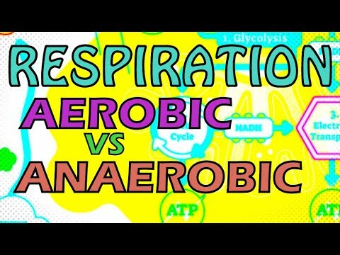RESPIRATION AEROBIC VS ANAEROBIC RESPIRATION OXYGEN DEBT