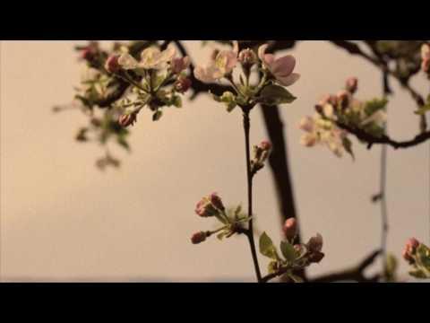 """Flowers"" Flying Lotus x Earl Sweatshirt Type Beat"