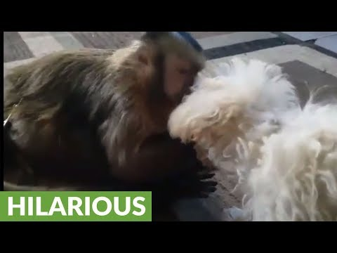 Monkey shares candy with puppy friend