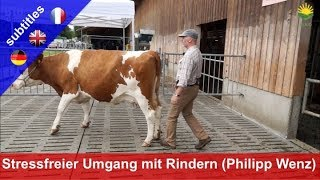 Stressfreier Umgang mit Rindern - Philipp Wenz zeigt Methode