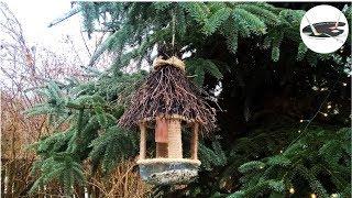 Jak zrobić karmnik z butelki [EASY DIY BIRD HOUSE  OUT OF BOTTLE] Pomysły plastyczne dla każdego