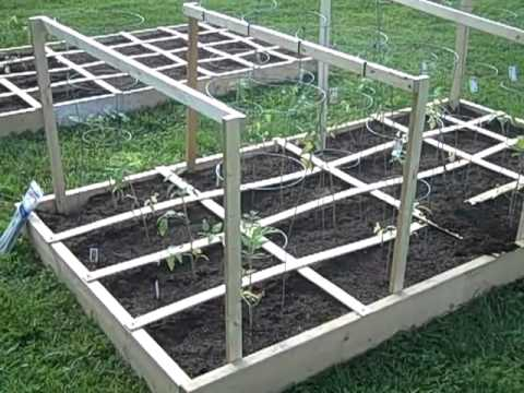 Square Foot Gardening, Tomatoes And Cage Supports