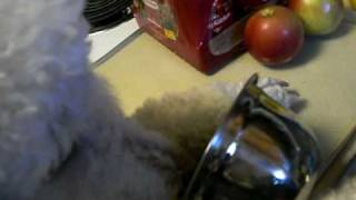 3-17-2010 Clear The Dining Table.mov