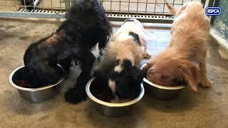 Puppies found dumped in Wetherby 'doing well'