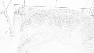 고양이  잠꼬대