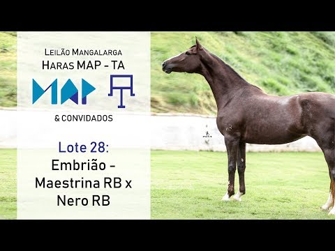Embrião - Nero RB x Maestrina RB