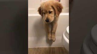 Puppy Dog Beached on Bathtub    ViralHog