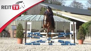 Springreiten lernen: Die Ausrüstung für das Pferd