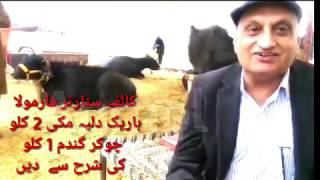 Dr.khalid pervez about calf starter of anmol  ڈاکٹر خالد پرویز کے جس کالف سٹارٹر پر انمول کٹا پلا