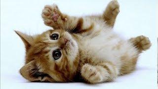 Милые котики и очаровательные котята | Подборка приколов про котов