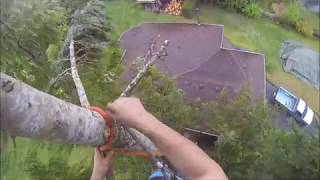 TREE TOP RIGGING ,, ONE MAN , ONE SAW , ONE ROPE